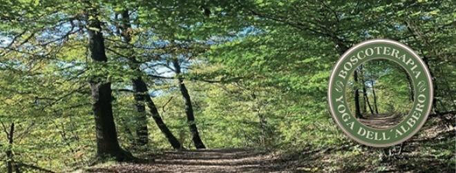 benessere-nel-bosco-pannello-sito